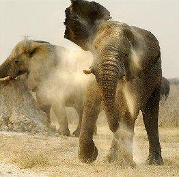 elefanti nel Parco Etosha, wildlife nelle riserve naturali della Namibia